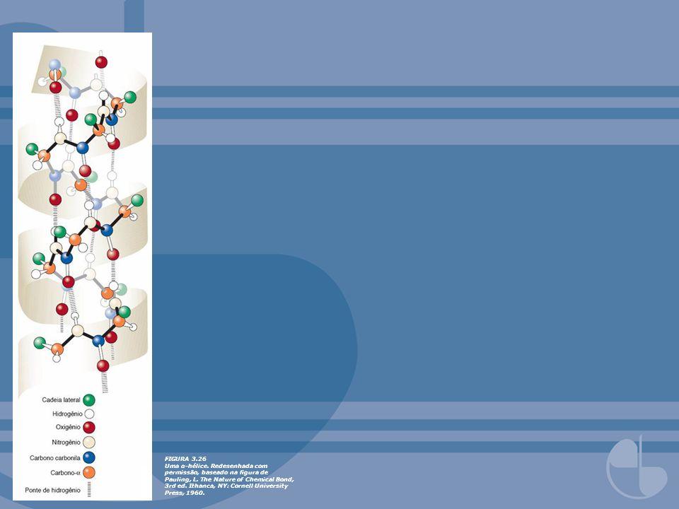 FIGURA 3.27Duas cadeias polipeptídicas em conformação folha-β.