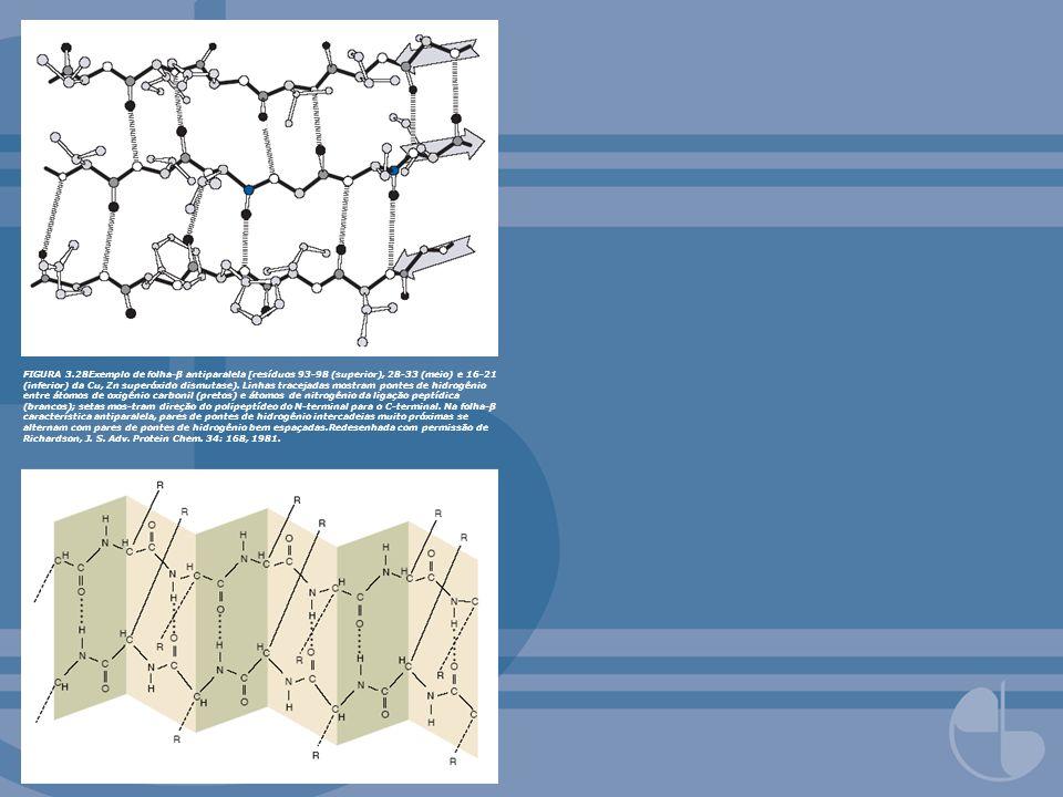 FIGURA 3.28Exemplo de folha-β antiparalela [resíduos 93-98 (superior), 28-33 (meio) e 16-21 (inferior) da Cu, Zn superóxido dismutase). Linhas traceja