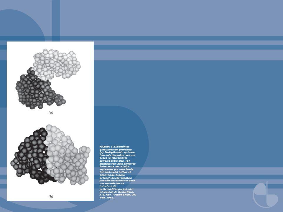 FIGURA 3.31Domínios globulares em proteínas. (a) Fosfoglicerato quinase tem dois domínios com um braço re-lativamente estreito entre eles. (b) Elastas