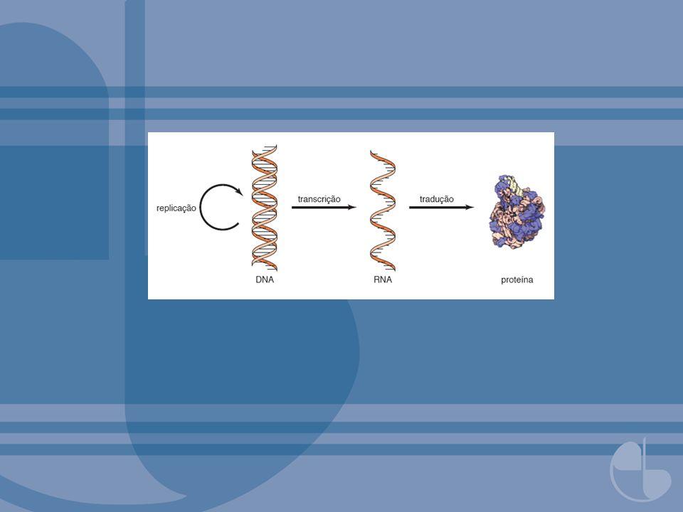 FIGURA 2.60Estrutura em martelo de RNA viral.