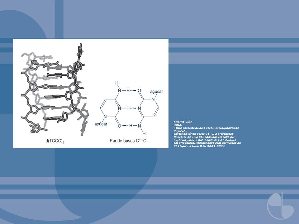 FIGURA 2.32 iDNA. i-DNA consiste de dois pares interdigitados de duplexes contendo vários pares C+ -C. A protonação favorável de uma das citosinas em