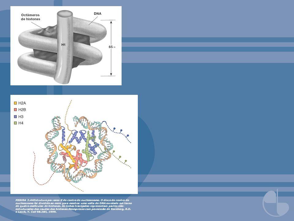 FIGURA 2.44Estrutura por raios-X do centro do nucleossomo. O disco do centro do nucleossomo foi dividido ao meio para mostrar uma volta do DNA enrolad