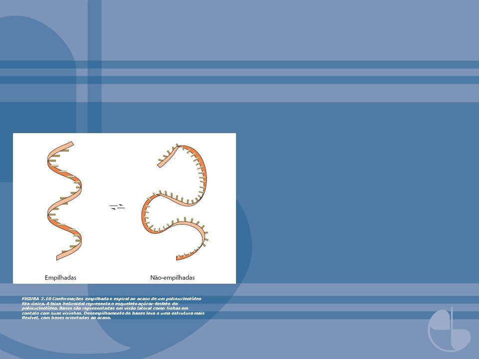FIGURA 2.10 Conformações empilhada e espiral ao acaso de um polinucleotídeo ta-única. A faixa helicoidal representa o esqueleto açúcar-fosfato do poli