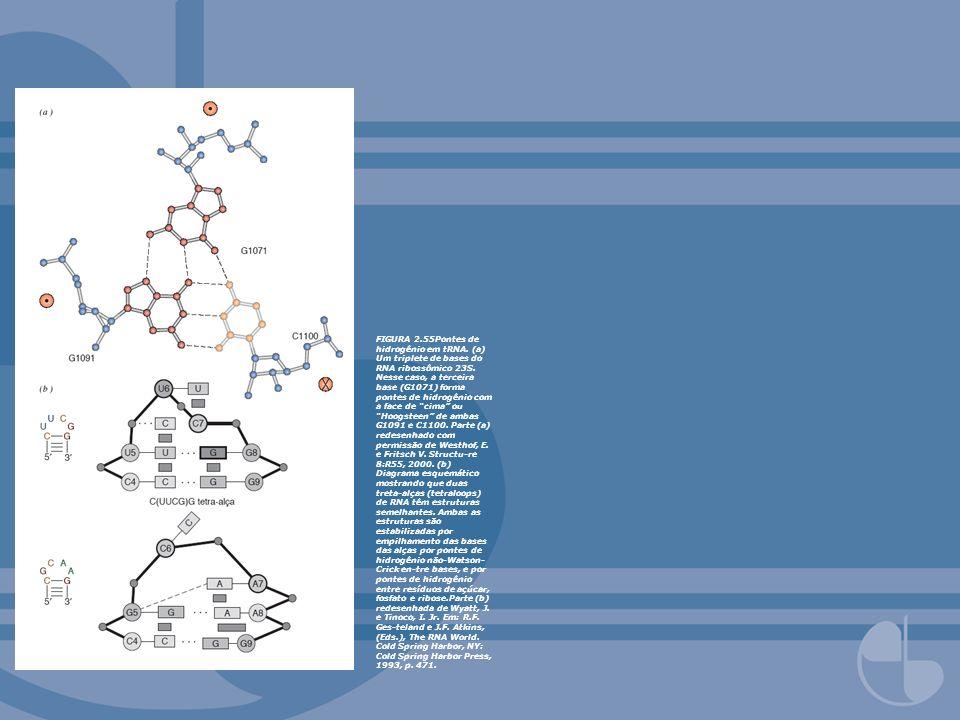 FIGURA 2.55Pontes de hidrogênio em tRNA. (a) Um triplete de bases do RNA ribossômico 23S. Nesse caso, a terceira base (G1071) forma pontes de hidrogên