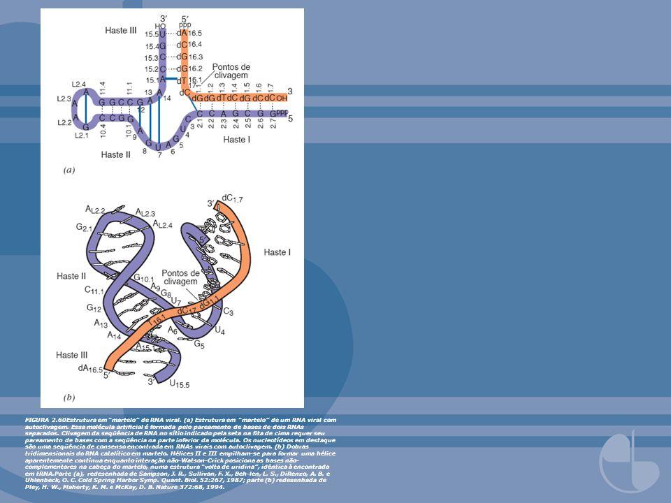 FIGURA 2.60Estrutura em martelo de RNA viral. (a) Estrutura em martelo de um RNA viral com autoclivagem. Essa molécula articial é formada pelo pareame
