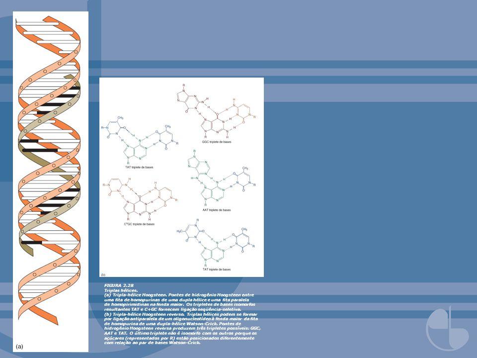 FIGURA 2.29: Triplas hélices intramoleculares: H-DNA.