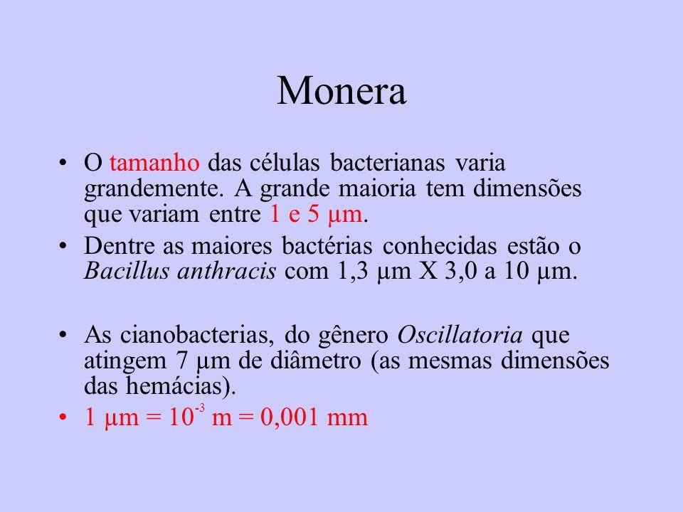 Monera O tamanho das células bacterianas varia grandemente. A grande maioria tem dimensões que variam entre 1 e 5 µm. Dentre as maiores bactérias conh