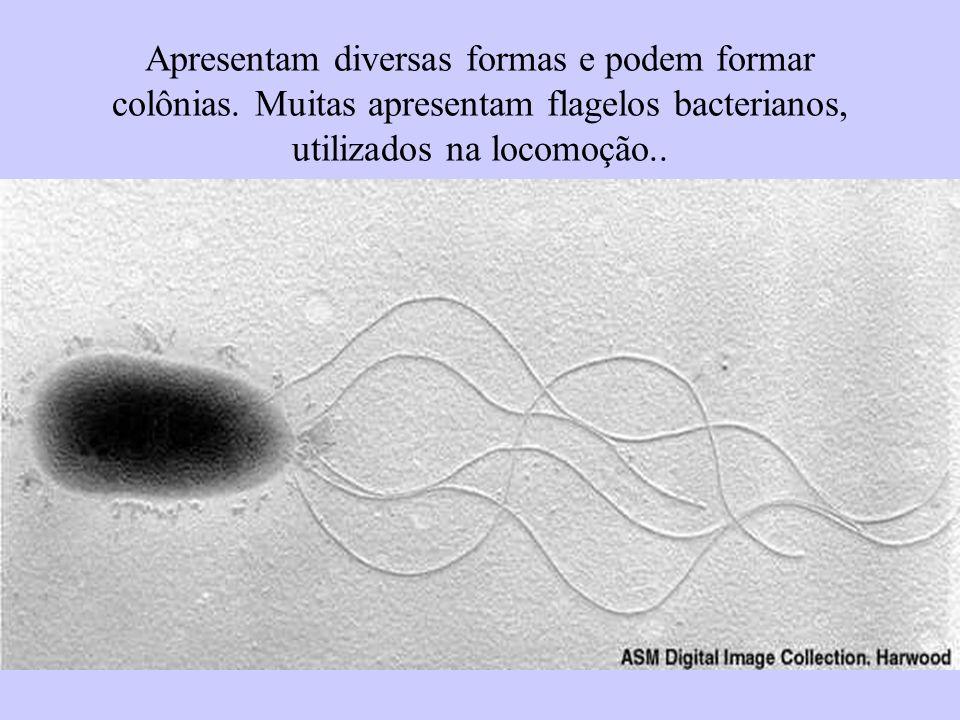 Apresentam diversas formas e podem formar colônias. Muitas apresentam flagelos bacterianos, utilizados na locomoção..