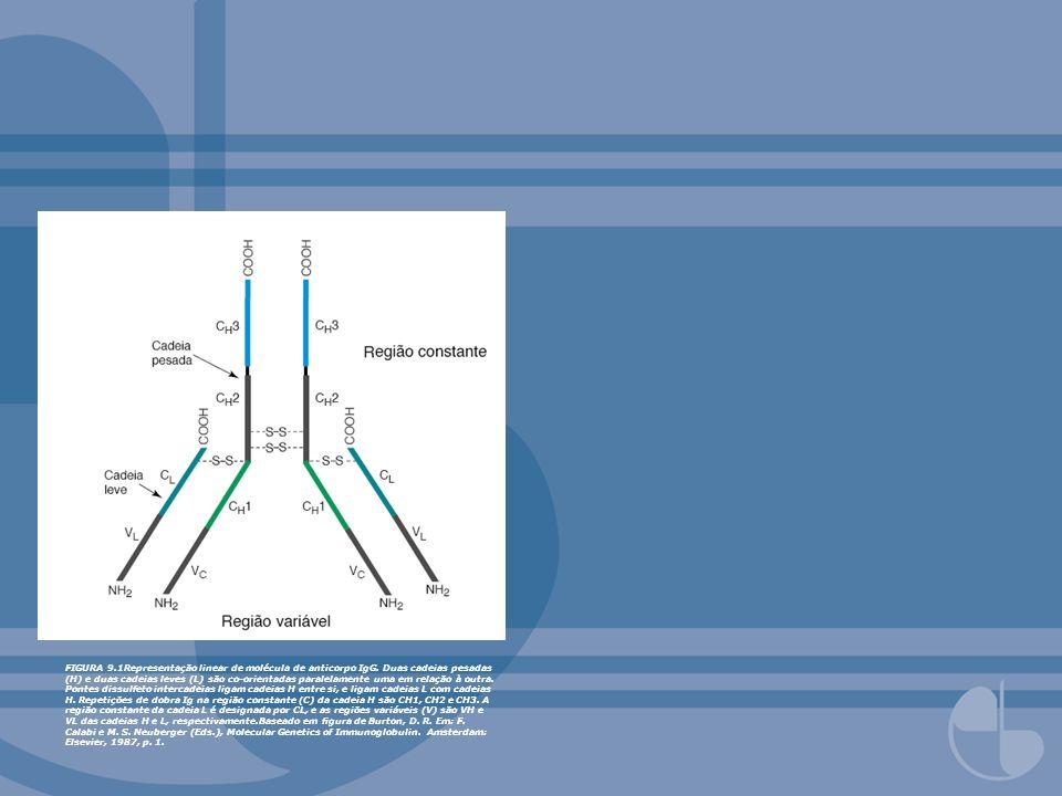 FIGURA 9.1Representação linear de molécula de anticorpo IgG. Duas cadeias pesadas (H) e duas cadeias leves (L) são co-orientadas paralelamente uma em