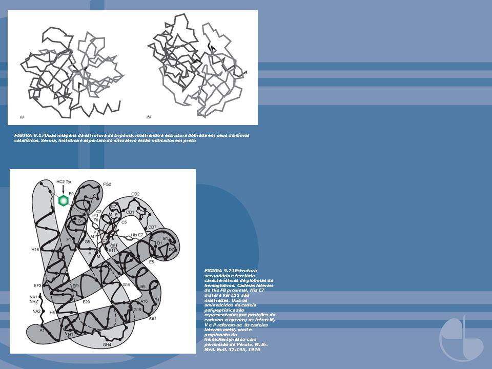 FIGURA 9.17Duas imagens da estrutura da tripsina, mostrando a estrutura dobrada em seus domínios catalíticos. Serina, histidina e aspartato do sítio a