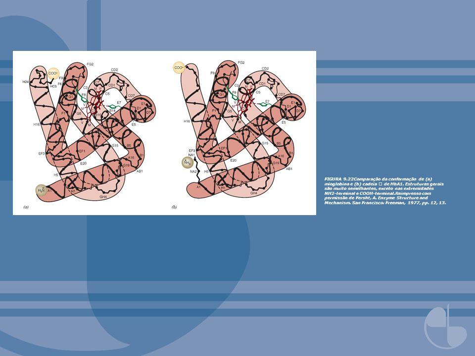 FIGURA 9.22Comparação da conformação de (a) mioglobina e (b) cadeia de HbA1. Estruturas gerais são muito semelhantes, exceto nas extremidades NH2-term