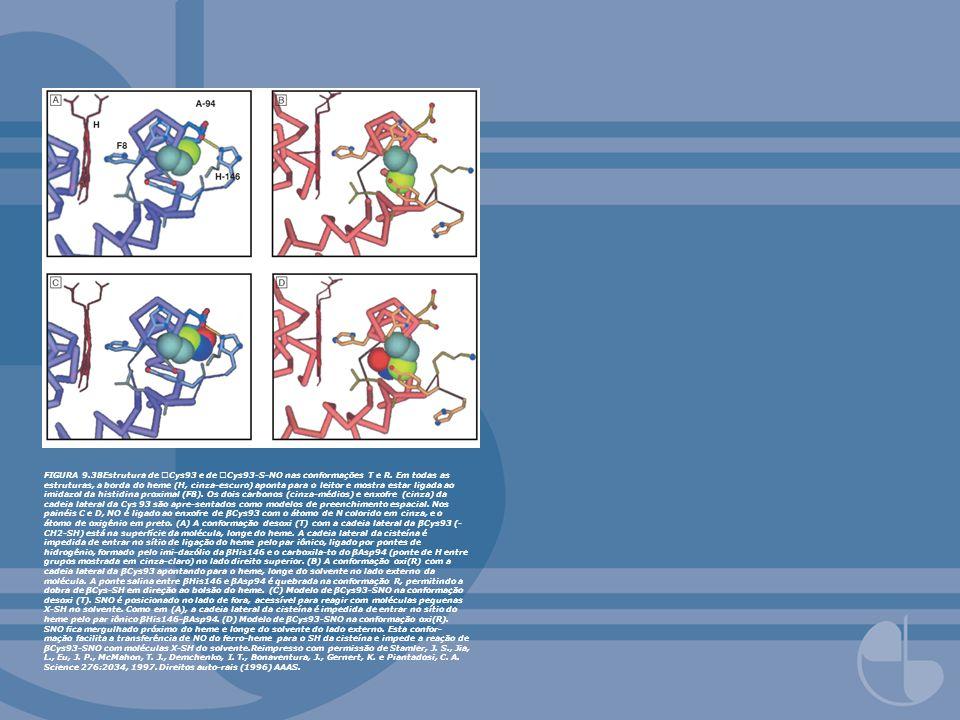FIGURA 9.38Estrutura de Cys93 e de Cys93-S-NO nas conformações T e R. Em todas as estruturas, a borda do heme (H, cinza-escuro) aponta para o leitor e