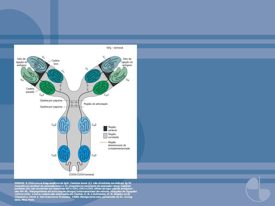 FIGURA 9.45Estrutura de nidogem.Estrutura esquemática da molécula de entactina/nido-gem-1.
