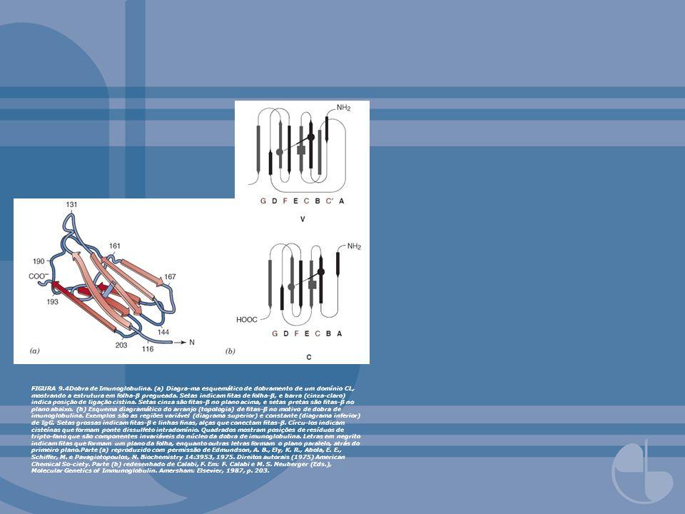 FIGURA 9.5Estrutura do carbono () do fragmento Fab de IgG KOL, mostrando domínios VL-VH e CL-CH1 interconec-tados por regiões de articulação (hinge).Redesenhado com permissão de Huber, R., Deisenho-fer, J., Coleman, P.