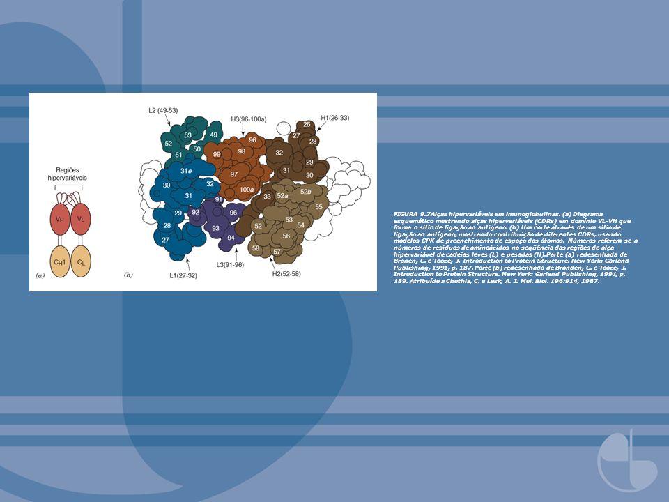 FIGURA 9.7Alças hipervariáveis em imunoglobulinas. (a) Diagrama esquemático mostrando alças hipervariáveis (CDRs) em domínio VL-VH que forma o sítio d