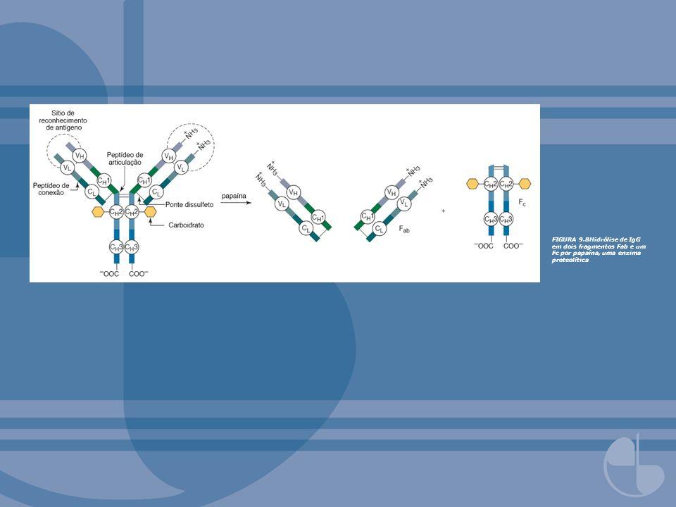 FIGURA 9.10Representação diagramática da estrutura em dobra de imunoglobulinas encontradas em diferentes proteínas da superfamília de genes imunoglobulina.