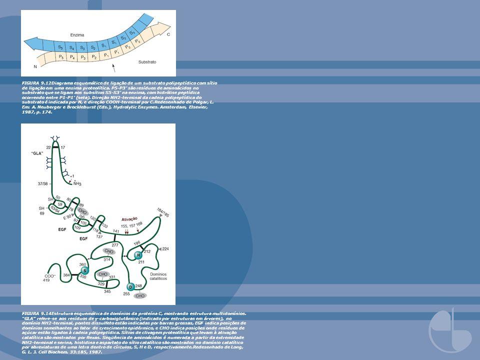 FIGURA 9.12Diagrama esquemático de ligação de um substrato polipeptídico com sítio de ligação em uma enzima proteolítica. P5-P3 são resíduos de aminoá