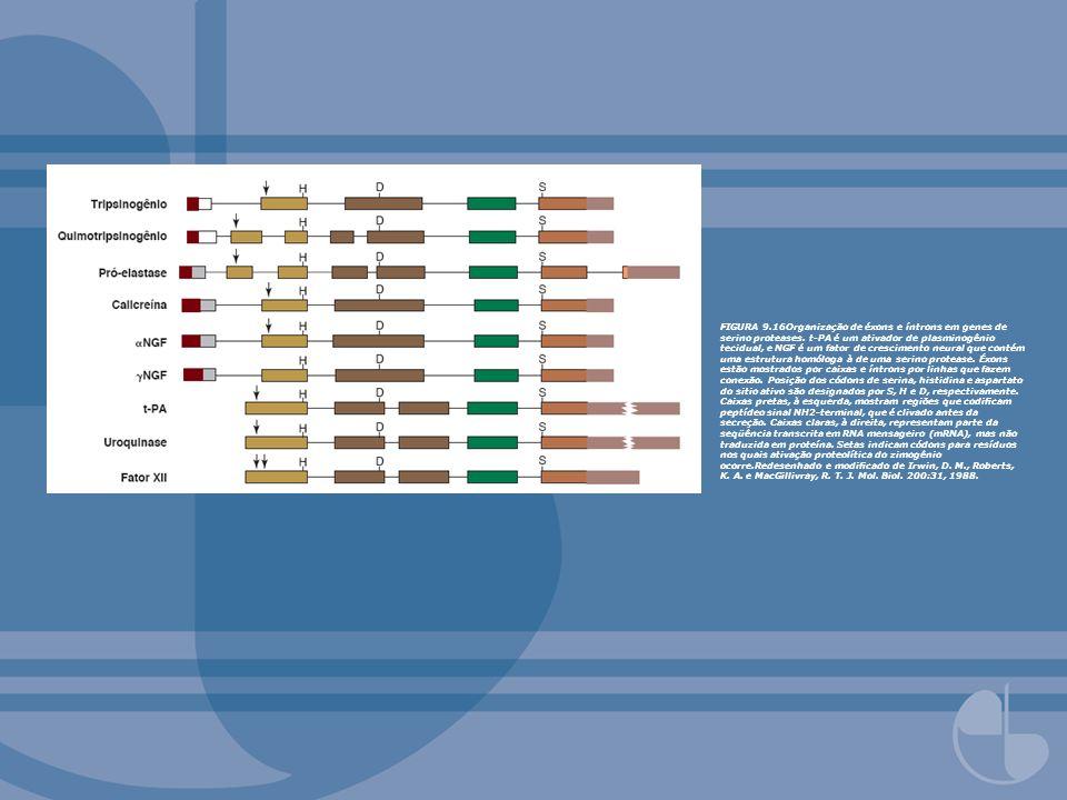 FIGURA 9.16Organização de éxons e íntrons em genes de serino proteases. t-PA é um ativador de plasminogênio tecidual, e NGF é um fator de crescimento