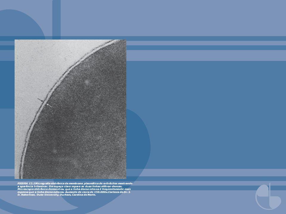 FIGURA 12.1Micrograa eletrônica da membrana plasmática de eritrócitos mostrando a aparência trilaminar. Um espaço claro separa as duas linhas elétron-