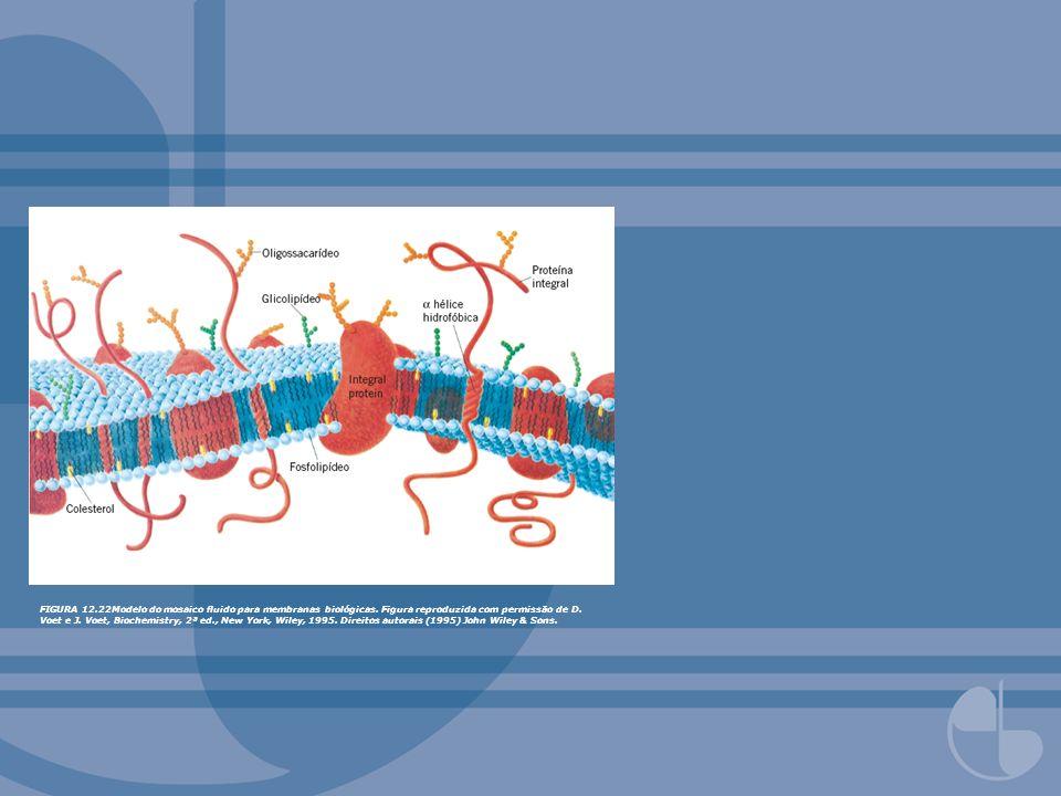 FIGURA 12.22Modelo do mosaico uido para membranas biológicas. Figura reproduzida com permissão de D. Voet e J. Voet, Biochemistry, 2ª ed., New York, W