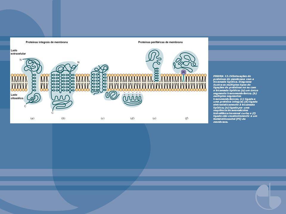 FIGURA 12.24Interações de proteínas de membrana com a bicamada lipídica. Diagrama ilustra os múltiplos tipos de ligações de proteínas na ou com a bica