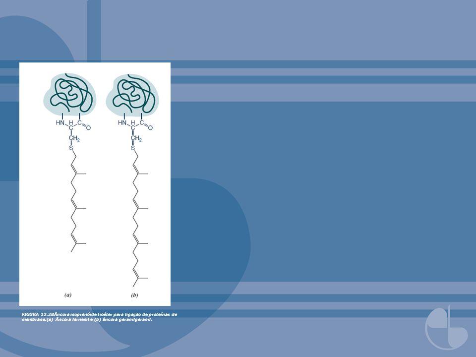 FIGURA 12.28Âncora isoprenóide tioéter para ligação de proteínas de membrana.(a) Âncora farnesil e (b) âncora geranilgeranil.