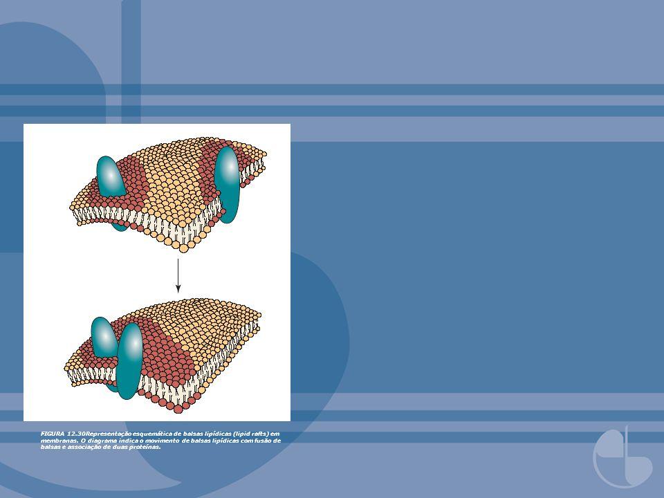 FIGURA 12.30Representação esquemática de balsas lipídicas (lipid rafts) em membranas. O diagrama indica o movimento de balsas lipídicas com fusão de b