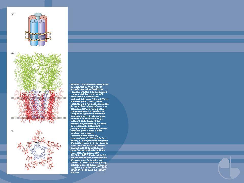 FIGURA 12.40Modelo do receptor de acetilcolina (ACh). (a) O arranjo das subunidades do receptor de ACh e sua topologia comum. (b) Receptor de ACh most
