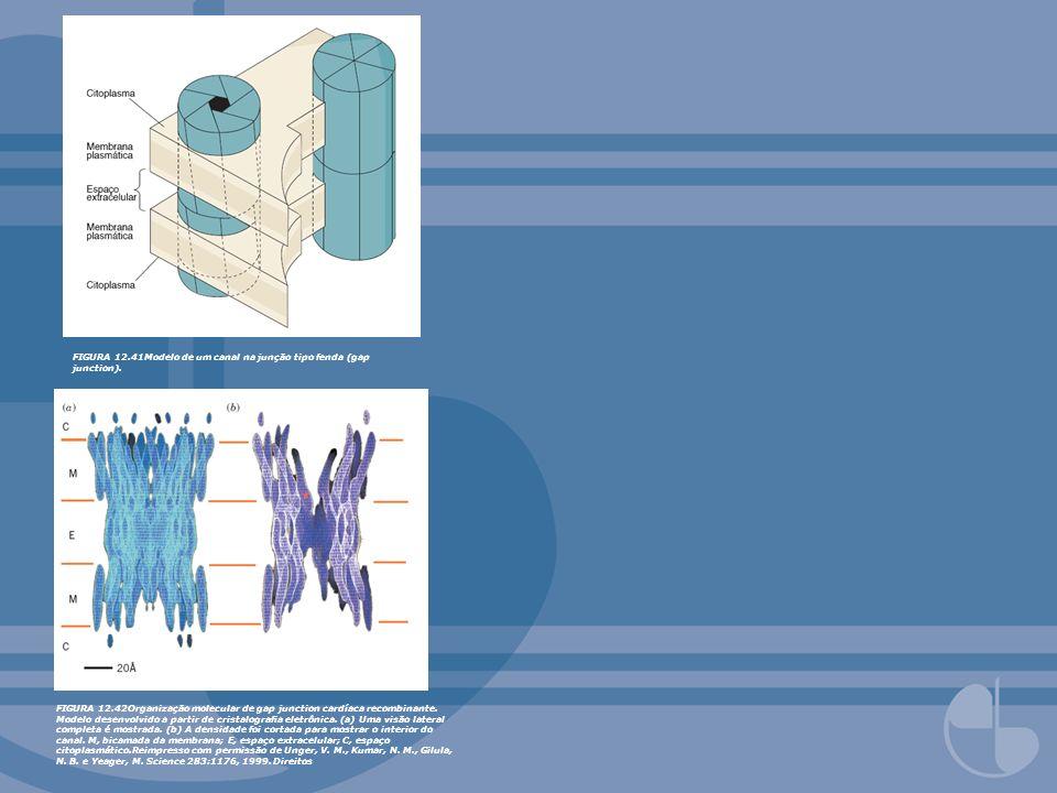 FIGURA 12.41Modelo de um canal na junção tipo fenda (gap junction). FIGURA 12.42Organização molecular de gap junction cardíaca recombinante. Modelo de