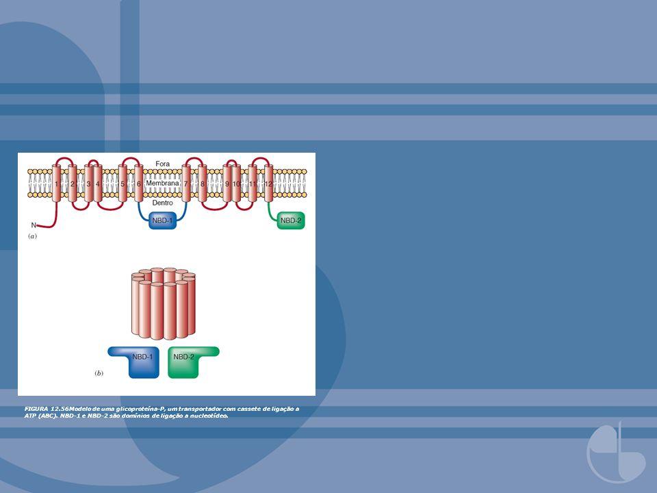 FIGURA 12.56Modelo de uma glicoproteína-P, um transportador com cassete de ligação a ATP (ABC). NBD-1 e NBD-2 são domínios de ligação a nucleotídeo.