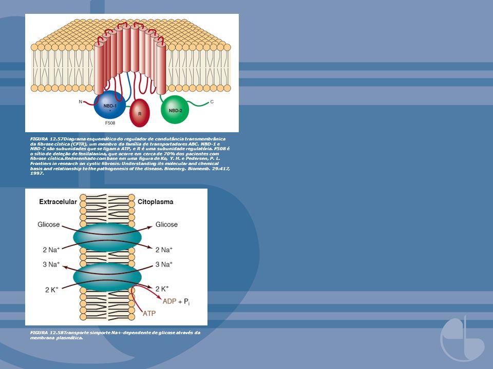 FIGURA 12.57Diagrama esquemático do regulador de condutância transmembrânica da brose cística (CFTR), um membro da família de transportadores ABC. NBD