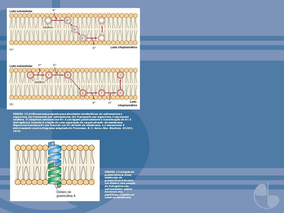 FIGURA 12.61Mecanismo proposto para atividades ionoforéticas de valinomicina e nigericina. (a) Transporte por valinomicina; (b) Transporte por nigeric