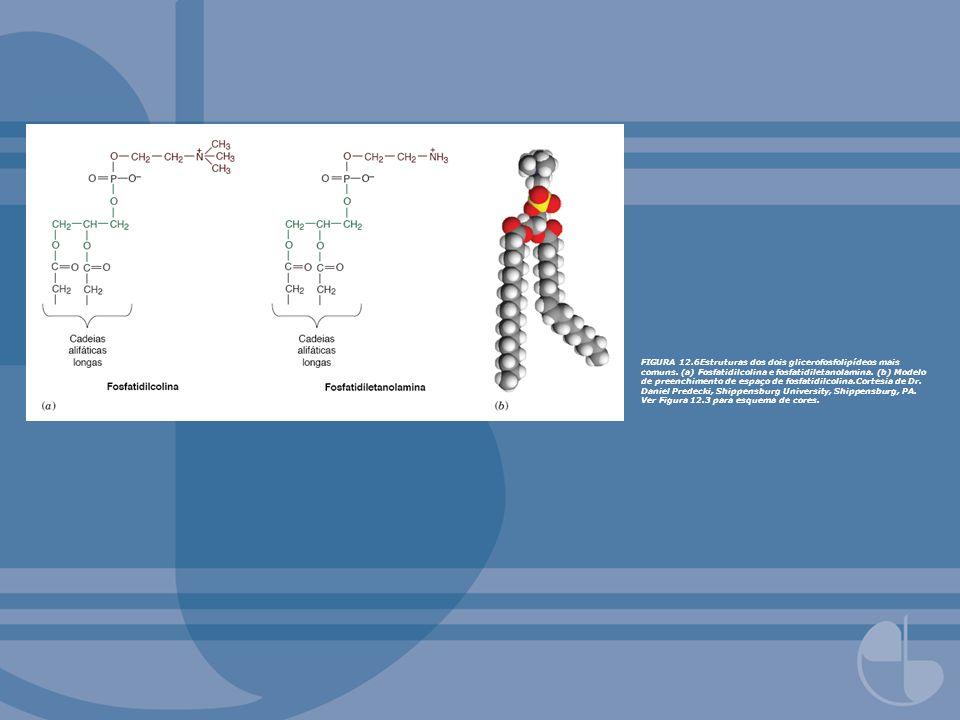 FIGURA 12.6Estruturas dos dois glicerofosfolipídeos mais comuns. (a) Fosfatidilcolina e fosfatidiletanolamina. (b) Modelo de preenchimento de espaço d