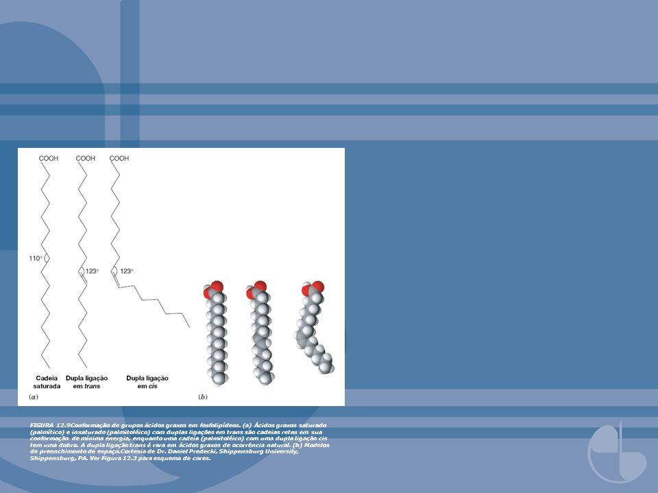 FIGURA 12.9Conformação de grupos ácidos graxos em fosfolipídeos. (a) Ácidos graxos saturado (palmítico) e insaturado (palmitoléico) com duplas ligaçõe