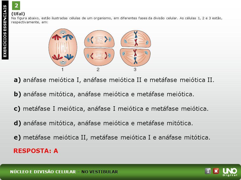 (Ufal) Na figura abaixo, estão ilustradas células de um organismo, em diferentes fases da divisão celular. As células 1, 2 e 3 estão, respectivamente,