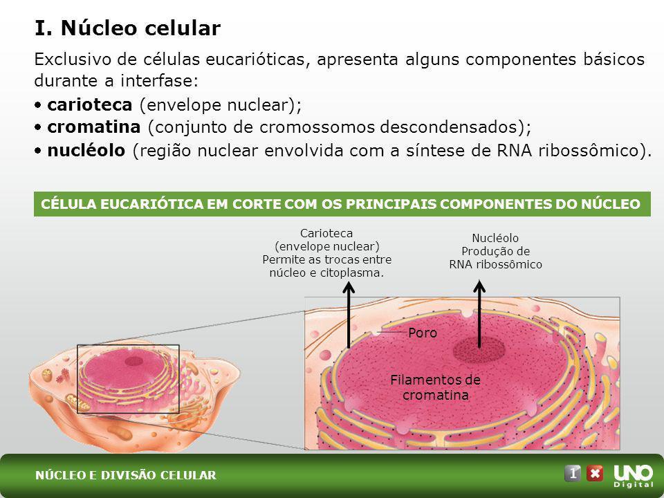 I. Núcleo celular Exclusivo de células eucarióticas, apresenta alguns componentes básicos durante a interfase: carioteca (envelope nuclear); cromatina