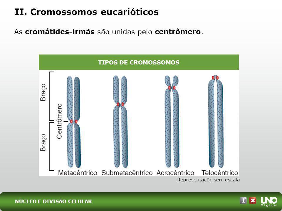 II. Cromossomos eucarióticos As cromátides-irmãs são unidas pelo centrômero. Representação sem escala TIPOS DE CROMOSSOMOS NÚCLEO E DIVISÃO CELULAR