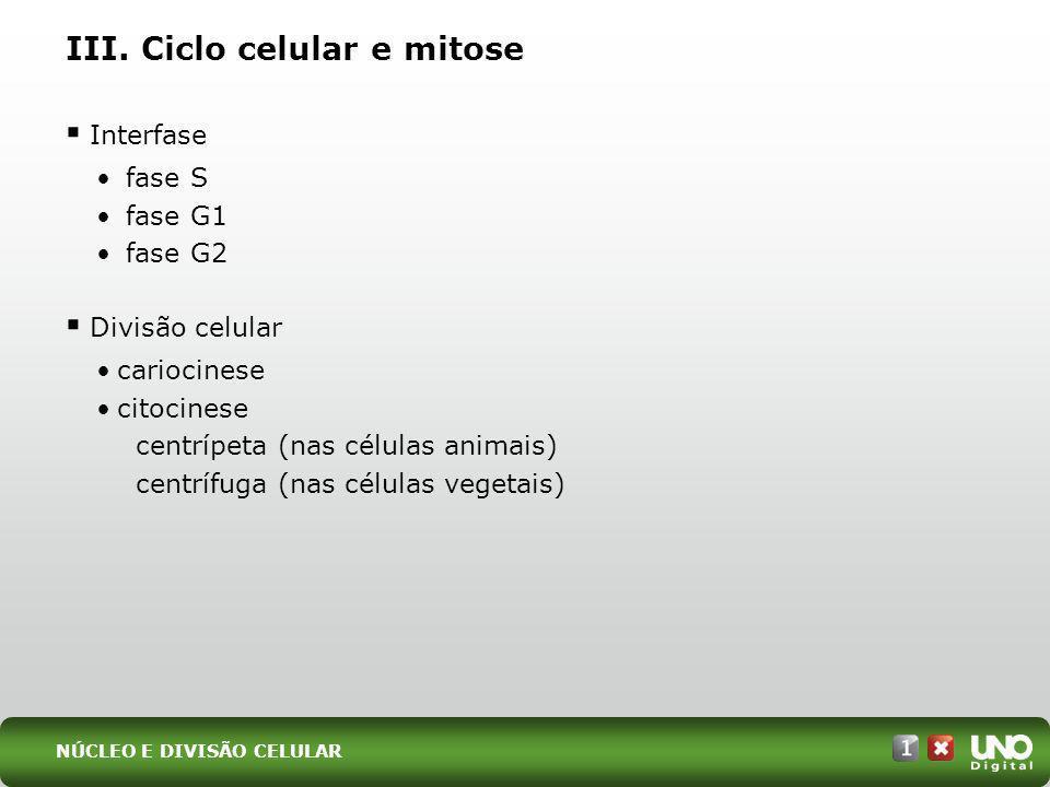 III. Ciclo celular e mitose Interfase fase S fase G1 fase G2 Divisão celular cariocinese citocinese centrípeta (nas células animais) centrífuga (nas c