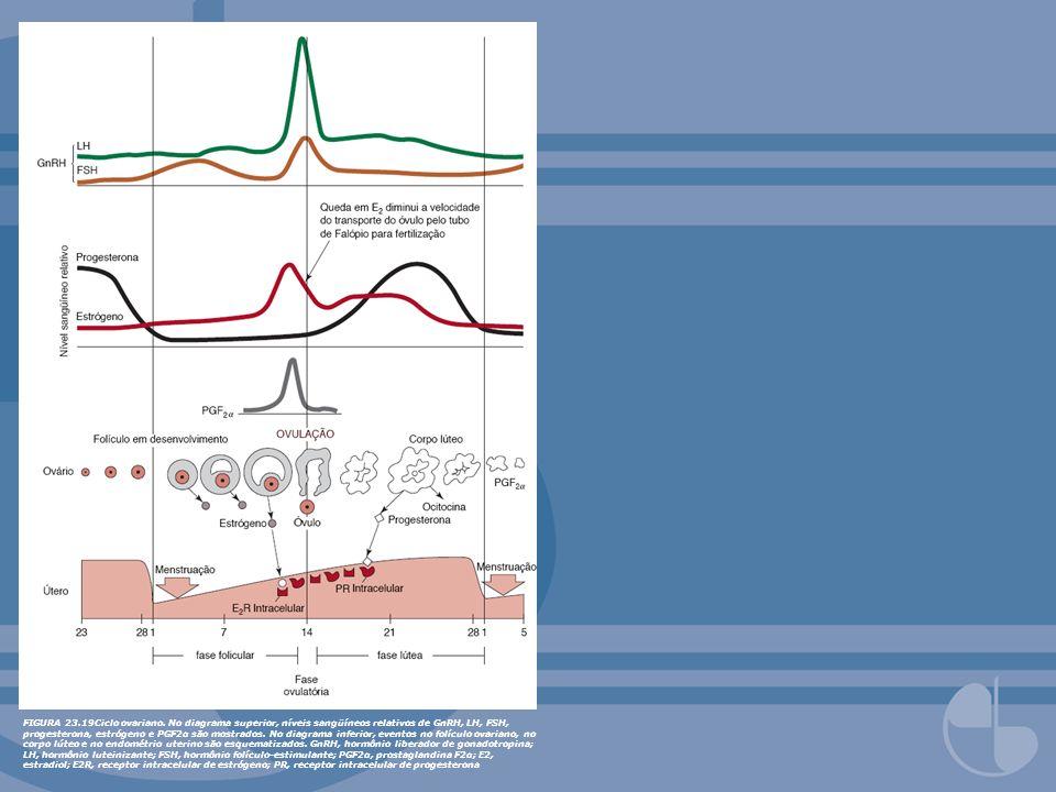 FIGURA 23.19Ciclo ovariano. No diagrama superior, níveis sangüíneos relativos de GnRH, LH, FSH, progesterona, estrógeno e PGF2α são mostrados. No diag