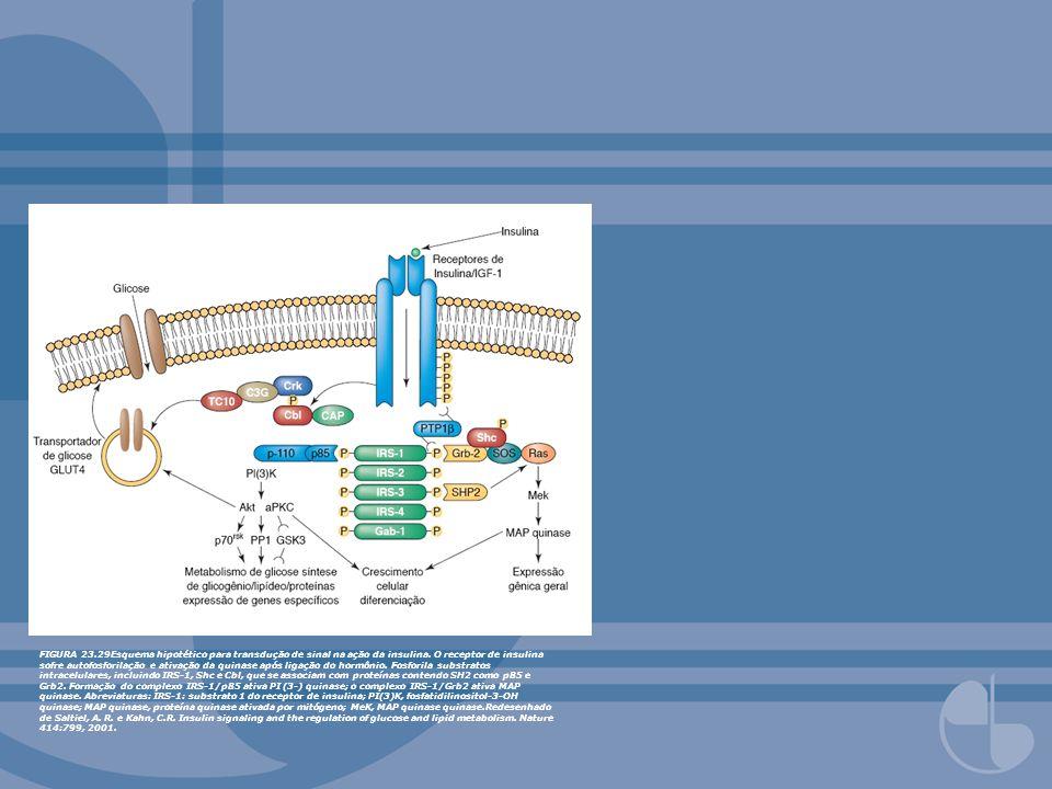 FIGURA 23.29Esquema hipotético para transdução de sinal na ação da insulina. O receptor de insulina sofre autofosforilação e ativação da quinase após