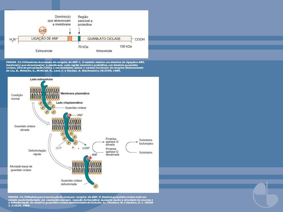 FIGURA 23.32Domínios funcionais do receptor de ANF-1. O modelo mostra um domínio de ligação a ANF, domínio(s) que atravessa(m) a membrana, uma região