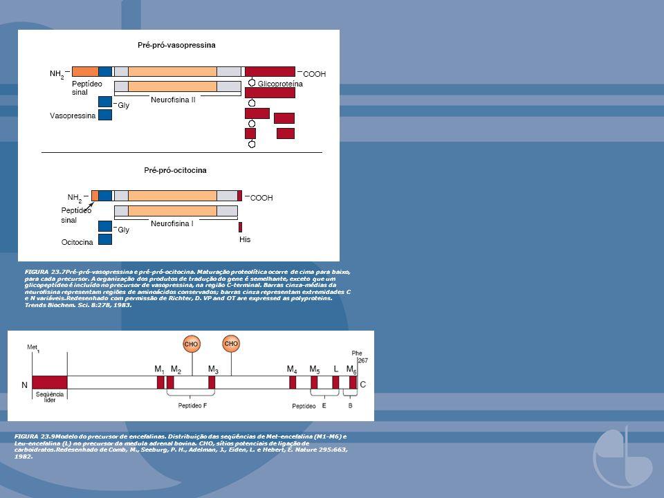 FIGURA 23.7Pré-pró-vasopressina e pré-pró-ocitocina. Maturação proteolítica ocorre de cima para baixo, para cada precursor. A organização dos produtos