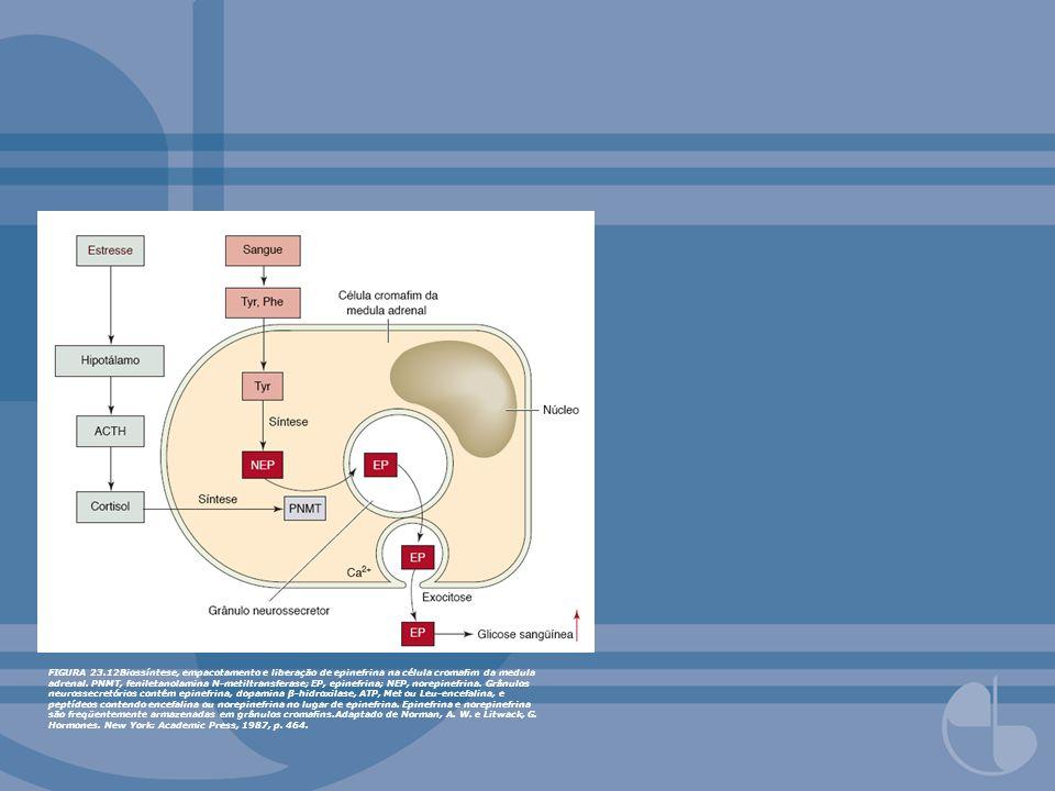 FIGURA 23.12Biossíntese, empacotamento e liberação de epinefrina na célula cromam da medula adrenal. PNMT, feniletanolamina N-metiltransferase; EP, ep