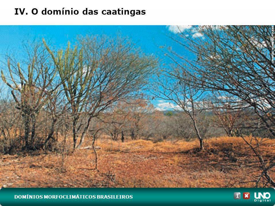 IV. O domínio das caatingas DORIVAL MOREIRA/PULSAR DOMÍNIOS MORFOCLIMÁTICOS BRASILEIROS