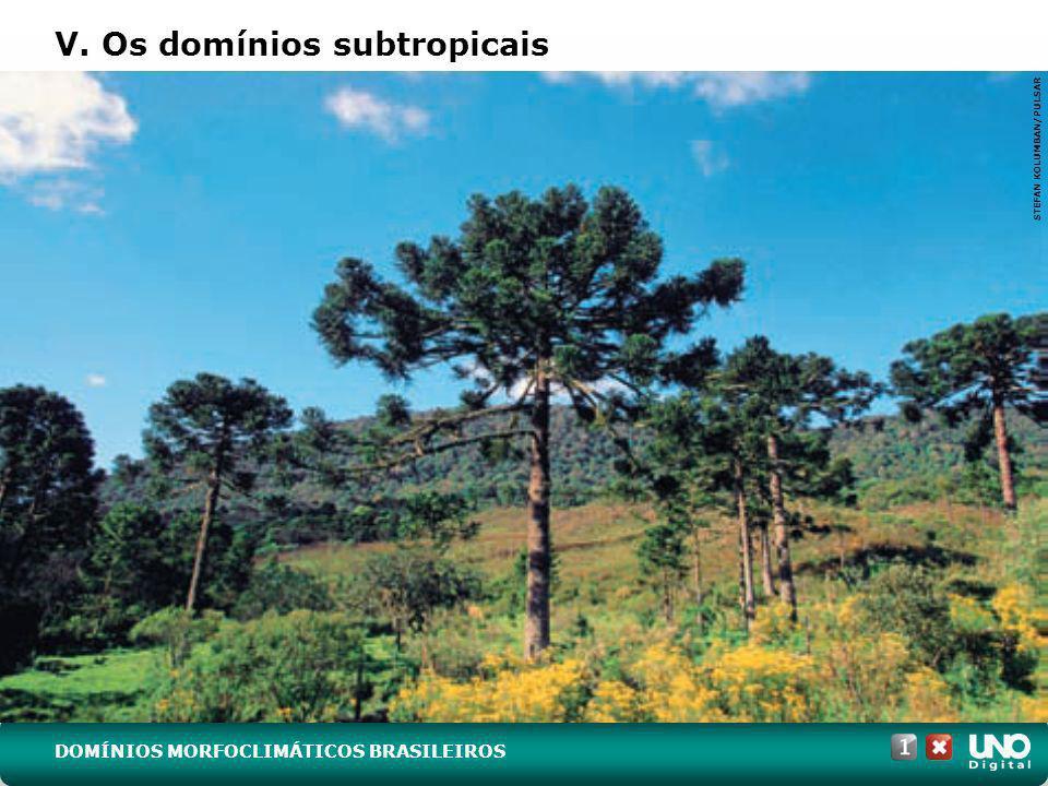 V. Os domínios subtropicais STEFAN KOLUMBAN/PULSAR DOMÍNIOS MORFOCLIMÁTICOS BRASILEIROS