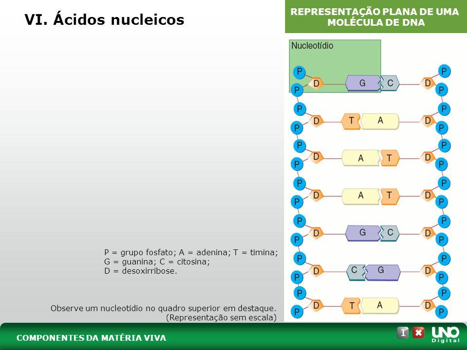 VI. Ácidos nucleicos Observe um nucleotídio no quadro superior em destaque. (Representação sem escala) P = grupo fosfato; A = adenina; T = timina; G =