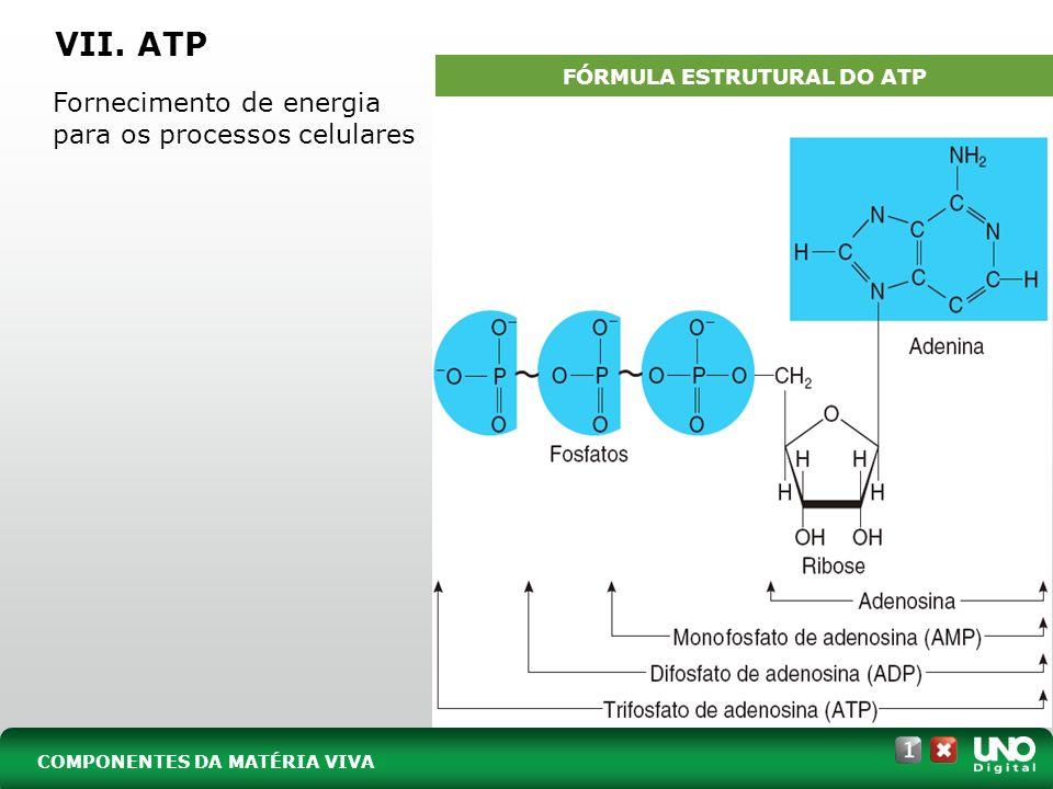 VII. ATP Fornecimento de energia para os processos celulares. COMPONENTES DA MATÉRIA VIVA FÓRMULA ESTRUTURAL DO ATP