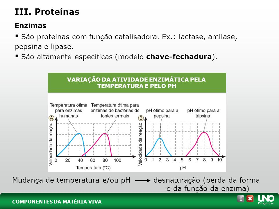 III. Proteínas São proteínas com função catalisadora. Ex.: lactase, amilase, pepsina e lipase. São altamente específicas (modelo chave-fechadura). Enz