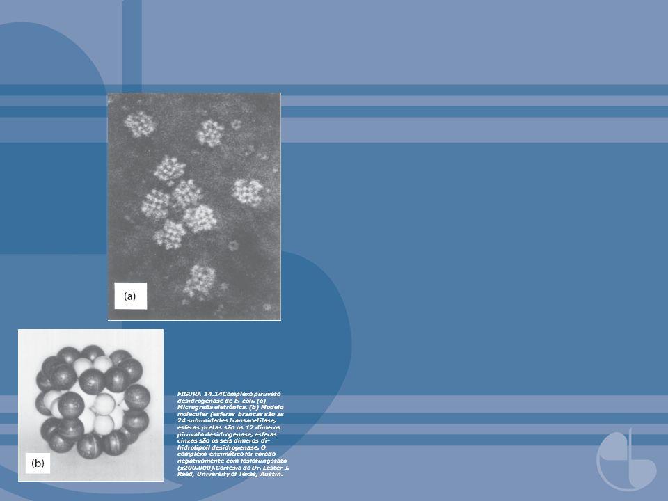 FIGURA 14.14Complexo piruvato desidrogenase de E. coli. (a) Micrograa eletrônica. (b) Modelo molecular (esferas brancas são as 24 subunidades transace