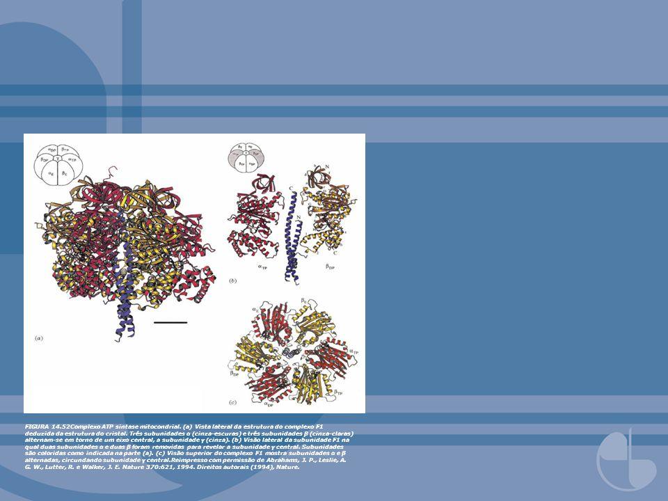 FIGURA 14.52Complexo ATP sintase mitocondrial. (a) Vista lateral da estrutura do complexo F1 deduzida da estrutura do cristal. Três subunidades α (cin